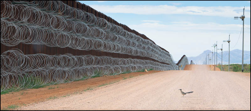 Roadrunner at Trump's brder wall, photo by Alejandro Prieto